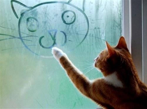 pisica-pictorita