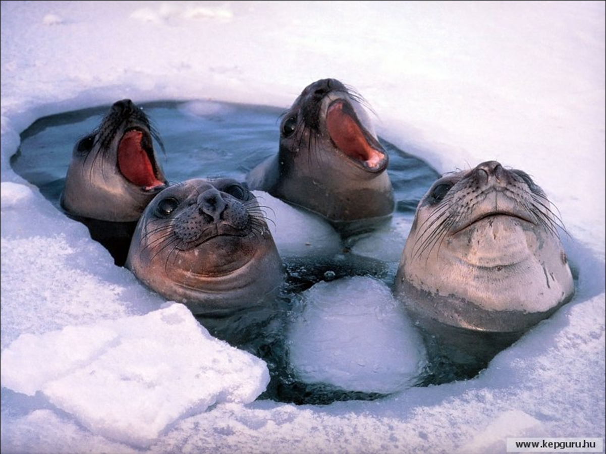 duminica-iernoasa-antarctica