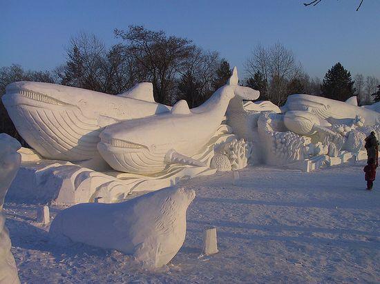 sculptura-gheata-balene