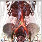 biomedicina-coprul-uman-3d-harta-interactiva-biologie