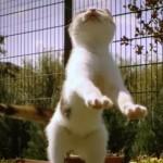 poza-pisica-slow-motion