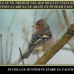 prezentare-pps-proverbe-zicale-romanesti