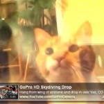 cat doing cat stuff video youtube