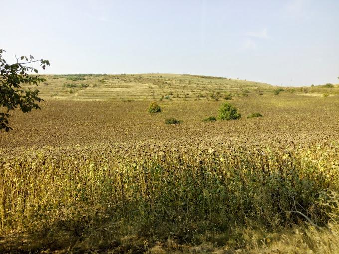 brasov-iasi-sep-2014-obisnuit-eu (5)