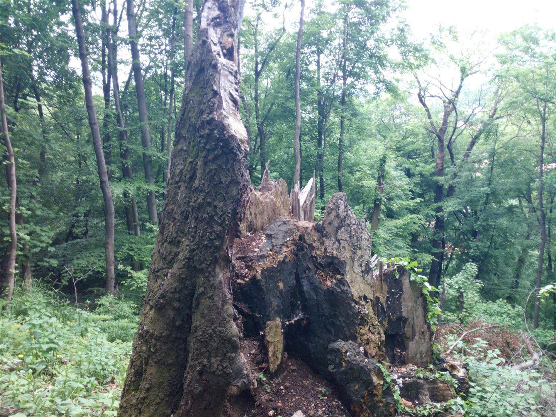 plmbare-tampa-mai-2015 (12) (Large)