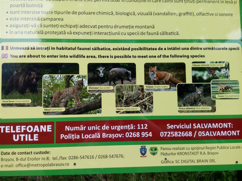 plmbare-tampa-mai-2015 (6) (Large)