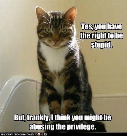 pisica-moralista